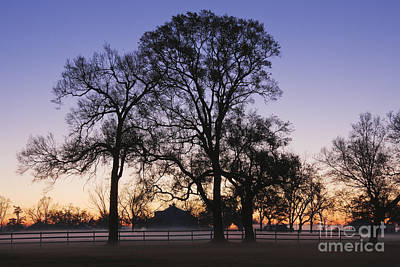 Trees And Fence In The Mist Art Print by Jeremy Woodhouse