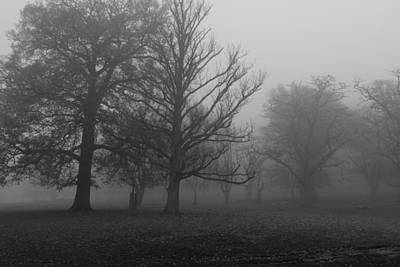 Photograph - Trees And Fog by Maj Seda