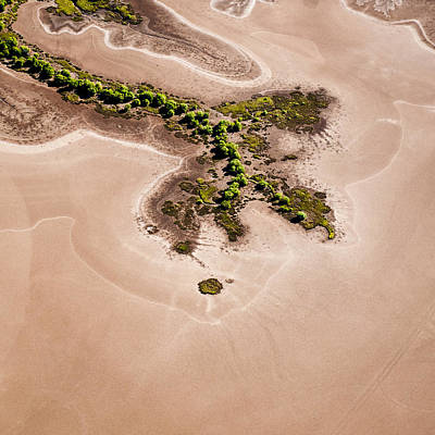 Y120831 Photograph - Trees And Mudflats by Judi Mowlem