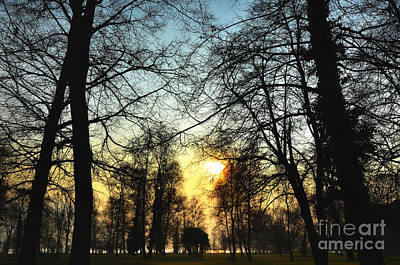 Trees And Sun In A Foggy Day Art Print