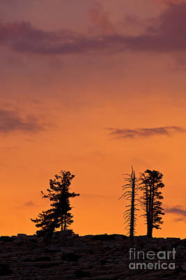 Photograph - Trees At Sunset by Olivier Steiner