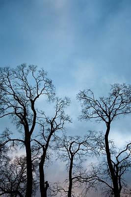Trees. Autumn. Art Print