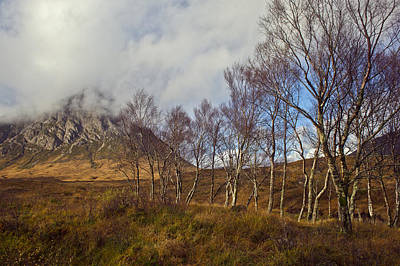 Stob Dearg Photograph - Trees Below Stob Dearg by Gary Eason