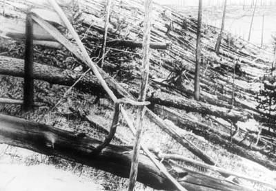 Trees Damaged In The Tunguska Event Art Print