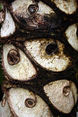 Photograph - Trees Have Eyes by Jennifer Bright