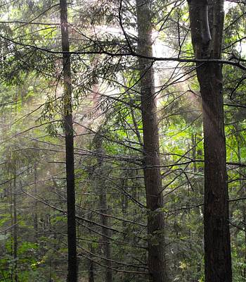 Photograph - Trees Hiding From The Light by William OBrien