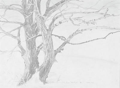 Trees In Snow Drawing - Trees In A Snow Storm by David Bratzel