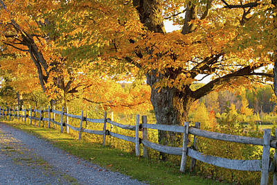Trees In Autumn Colours And A Fence Art Print by David Chapman