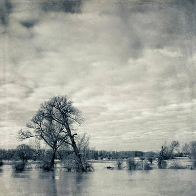 White River Scene Photograph - Trees In River Rhine by Dirk Wüstenhagen Imagery