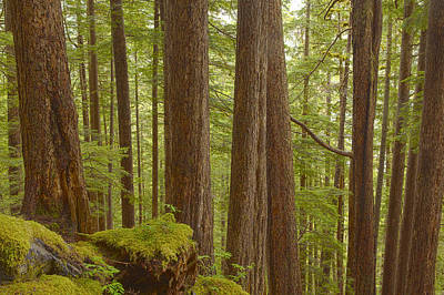 Prints Of Alaska Photograph - Trees In The Forest by Tim Grams