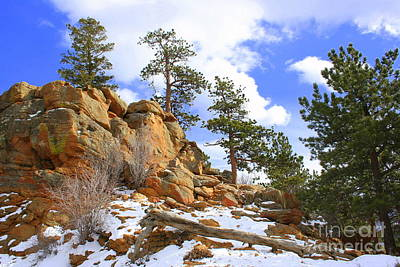Photograph - Trees In The Rocks by Julie Lueders