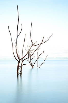 Malapascua Island Photograph - Trees In Water by Flash Parker