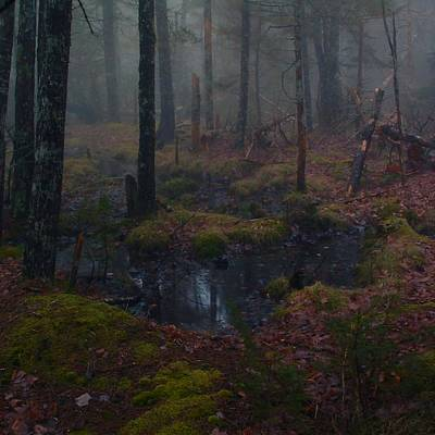 Photograph - Trees Lost In The Fog by William OBrien