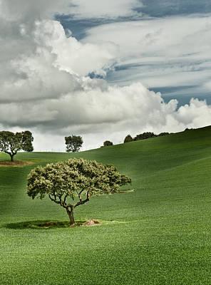 Y120831 Photograph - Trees by Manolo Guijarro