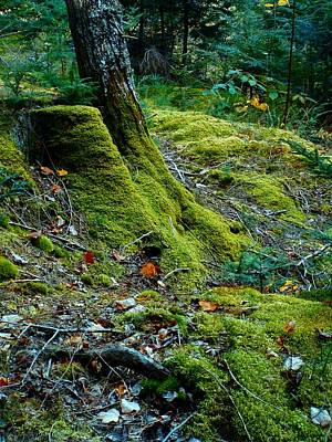 Photograph - Trees Moss Lives On by William OBrien