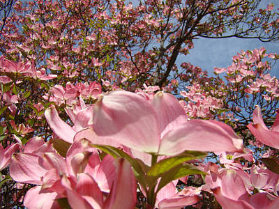 Trees Nature Fine Art Prints Pink Dogwood Flowers Art Print