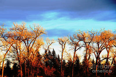 Photograph - Trees Of Gold by Alyce Taylor