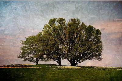 Photograph - Trees Of Life by Trish Tritz