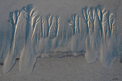 Photograph - Trees Of The Sea by Nancy Griswold