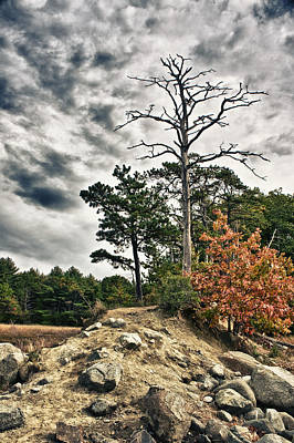 Photograph - Trees On A Ledge by Edward Myers