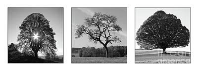 Trees On Canvas Art Print by Bruno Santoro