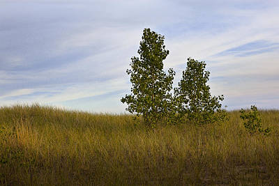 Modern Kitchen - Trees on Grassy Dune Top By Lake Michigan No.015 by Randall Nyhof