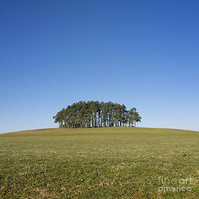 Numerous Photograph - Trees On The Hill by Bernard Jaubert