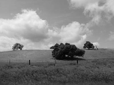 Print featuring the photograph Trees On The Hillrise by Kathleen Grace