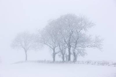 Trees Seen Through Winter Whiteout Print by John Short