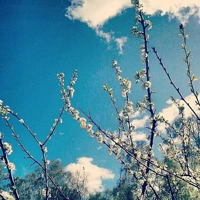 Landscape_lover Photograph - #trees #tree #landscape_lover by Irina Rudakova