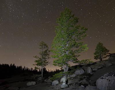 Star Field Photograph - Trees Under Stars by Sean Duan