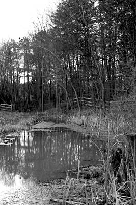 Trees With Pond Art Print by Terry Thomas