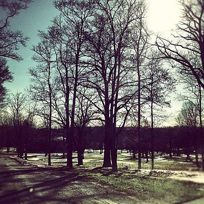 Woodland Wall Art - Photograph - #trees #woodland #forest #sun #fall by Shannon Ferguson
