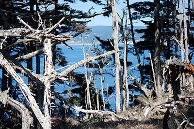 Photograph - Treescape by Harvey Barrison