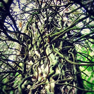 Woodland Wall Art - Photograph - #treescollection #tree #ivy #old by Fay Pead