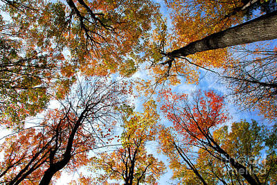 Colorful Leaves Photograph - Treetops by Elena Elisseeva