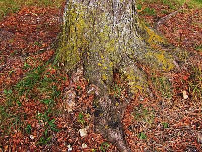 Photograph - Treetrunk by Todd Sherlock