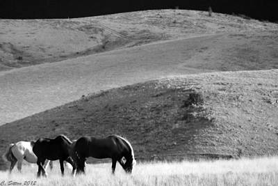 Photograph - Tres Caballos by C Sitton