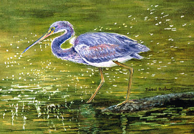 Painting - Tri Colored Heron by Barbel Amos