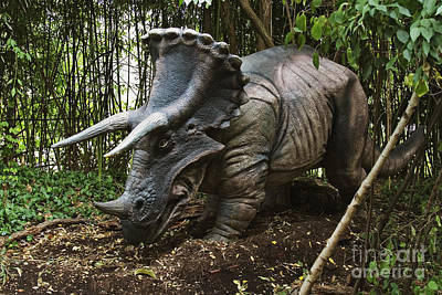 Reconstruction Photograph - Triceratops by David Davis and Photo Researchers