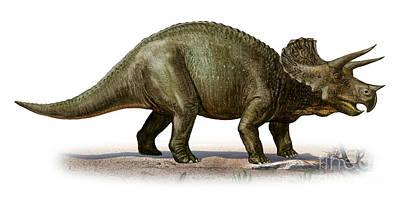 Triceratops Prorsus, A Prehistoric Era Print by Sergey Krasovskiy