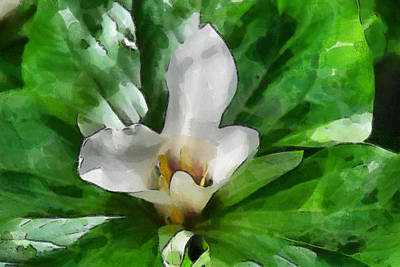 Digital Art - Trillium In Flower by Fran Woods