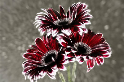 Photograph - Triple Gerbera Fractalius by Fiona Messenger