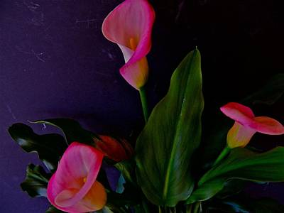 Triplets Of Calla Lilies Art Print by Randy Rosenberger
