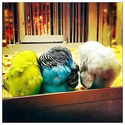 Trois Petits Oiseaux Qui Font Dodo Art Print