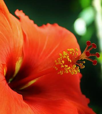 Photograph - Tropical Bloom by Bruce Bley
