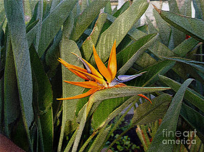 Photograph - Tropical Flower by Marilyn Marchant