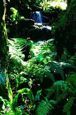 Tropical Forest Original