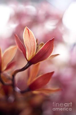 Plumeria Photograph - Tropical Grace by Mike Reid