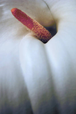 Photograph - Tropical Lily by Nancy Griswold